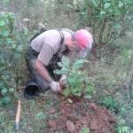 Rannie planting trees
