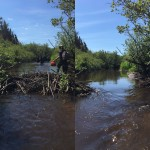 Removing an inactive beaver dam