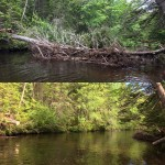 Before & After of a blockage of windfallen trees