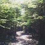 Mooney's Pond trail