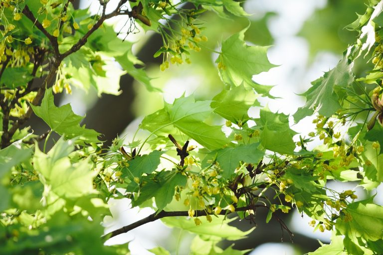 leaf, nature, growth